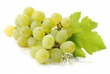 Vynuogė 'JUNIOR'