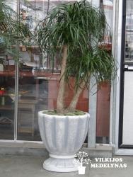 Didesnė betoninė vaza